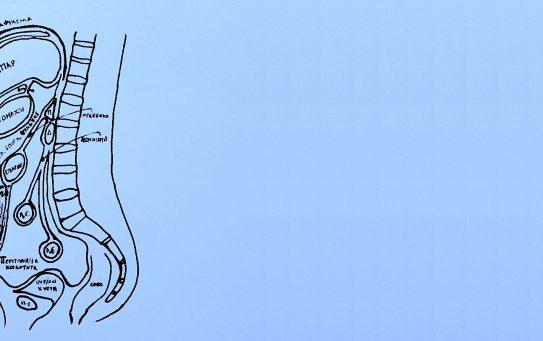 Το Περιτόναιο: Ανατομία & Φυσιολογία